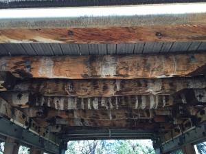 Jarrah supports under bridge in Harvey.