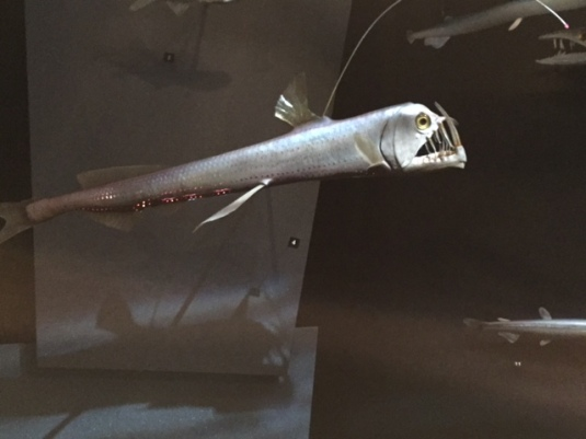 werid fish
